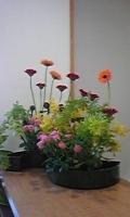 折口 今週の花20090210.jpeg