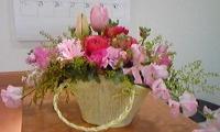 100120_120244kongetu tulip.jpg